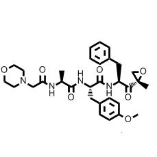 ONX-0914, Immunoproteasome Inhibitor